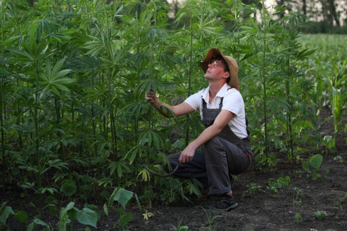 Hemp Farmers Now Eligible for Federal COVID-19 Relief-hemp news-CBD-CBDToday